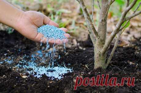 Простые минеральные удобрения: полная справка | 6 соток