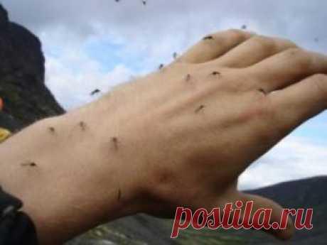 Простой способ избавиться от комаров.