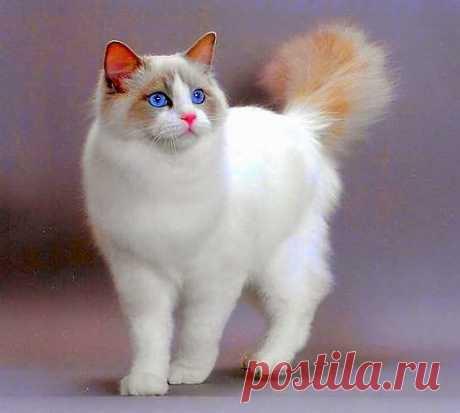 ЗАБАВНЫЕ ЖИВОТНЫЕ: - natali5357@mail.ru - Почта Mail.Ru