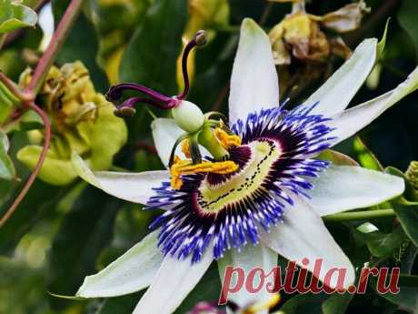 10 настоящих фантастических растений