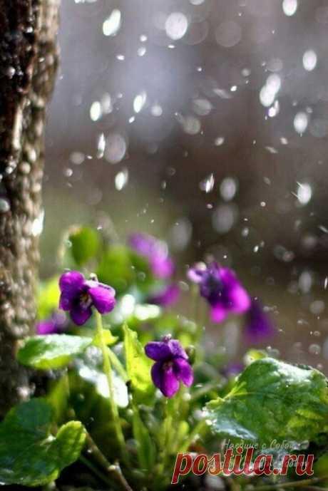 …Весной дождь пахнет надеждой. Подним хочется жить, любить, считать капли, сбиваясь сосчета, ловить ихязыком, запоминая вкус свежести новой поры. Весенний дождь похож намятный коктейль скубиками льда. Коктейль извесны, такнапоминающий лето…