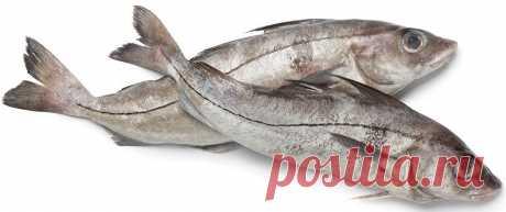И совсем не дорого! Топ-5 самых полезных морепродуктов для здоровья и красоты женщины