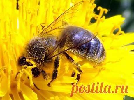 Добываем мед