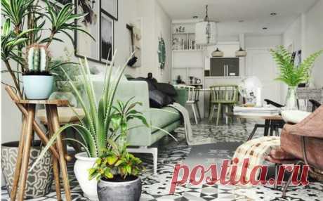 10 мест в квартире, куда нельзя ставить растения | ДОМ | Яндекс Дзен