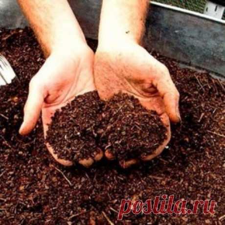 Сорта овощей для выращивания в контейнерах - МирТесен