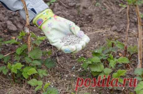 Какие удобрения вносить весной: чем подкормить сад, огород, газон и цветник   Дела огородные (Огород.ru)