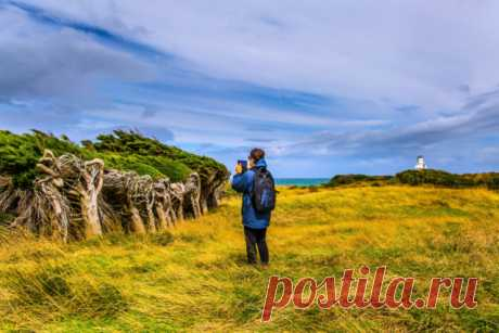 GISMETEO.RU: Люди приезжают со всего мира, чтобы посмотреть на эти деревья - Природа | Новости погоды.