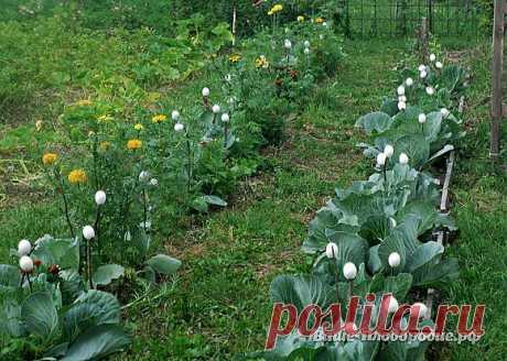 Яичная скорлупа в помощь огороднику — Ваше Плодородие