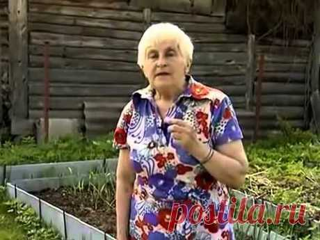 Галина Кизима - Посадка картофеля под солому - YouTube