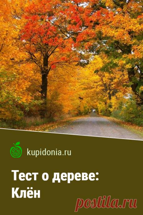 Тест о дереве: Клён. Интересный тест о клёне из серии тестов о деревьях. Проверьте свои знания!