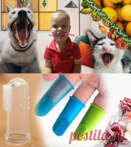 🍒Кариес или ссоры: 3 причины, почему стоит чистить зубы малышу насильно, если он против | Живые будни 🍒 | Яндекс Дзен