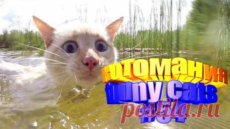 видео смешные коты, смешное видео коты, видео смешной кот, смешное видео кот, видео коты приколы, том кот видео, коты воители видео, видео про кота, кота видео, видео животные смешные, смешные видео животных, смешное животное, смешно животные, смешное животные, приколы котов, прикол котов, приколы с котом, кошки видео смешное, кошки смешные видео, смешное про кошек, смешное видео кошек, видео кошек смешные, кошка смешное видео, кошка смешная видео, смешно про кошек, кошки и смешные