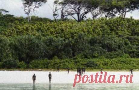 Странности племени Мериан | МЫСЛЬ На островах к северо-западу от Австралии расселилось небольшое племя Мериам. Мужчины этого племени ведут себя, на первый взгляд, чрезвычайно нерационально. Они промышляют ловлей морских черепах и рыбалкой (с помощью гарпуна), причем оба этих занятия крайне неэффективны и имеют очень мало смысла. Разного рода моллюски и ракообразные, коих немало в прибрежных водах — не менее питательная пища, и найти ее гораздо проще и быстрее.