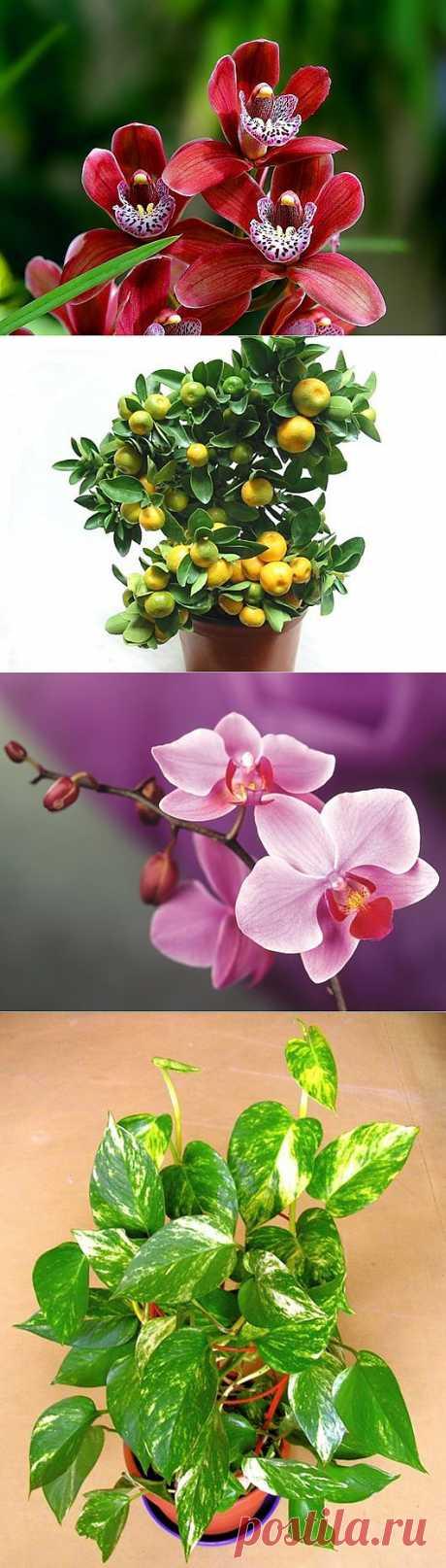 Какие комнатные растения полезно выращивать
