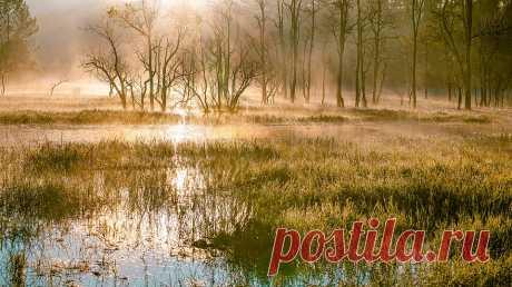 Васюганские болота: топ-5 шокирующих фактов о самой большой топи в мире