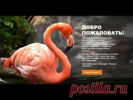 Липецкому зоопарку более 30 лет