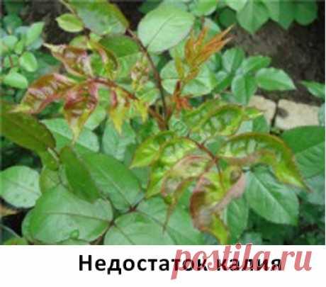 фото мозаики резухи на розах– Google Поиск