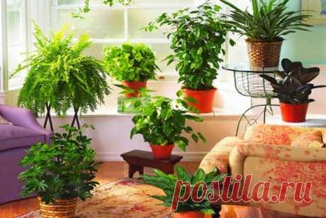 Перекись водорода — уникальное удобрение для комнатных цветов   Цветы в квартире и на даче – от Радзевской Виктории   Яндекс Дзен