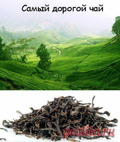 Самый дорогой чай в мире. Первые 8-мь мест