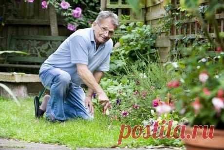 Маленькие секретики (садовод-садоводу).