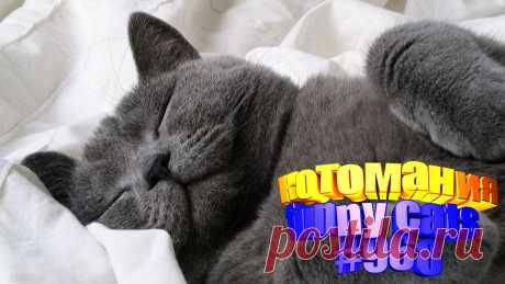 Вам нравится смотреть смешные видео про котов? Тогда мы уверены, Вам понравится наше видео 😍. Также на котомании Вас ждут: видео кот,видео кота,видео коте,видео котов,видео кошек,видео кошка,видео кошки,видео о котах, видео о кошках смешные, видео с кошками, котик, кото приколы, кошек смешные, милые, приколы от кошек, про котика, с котом, смешное котики, смешные животные бесплатно, смешные кошки видео до слез