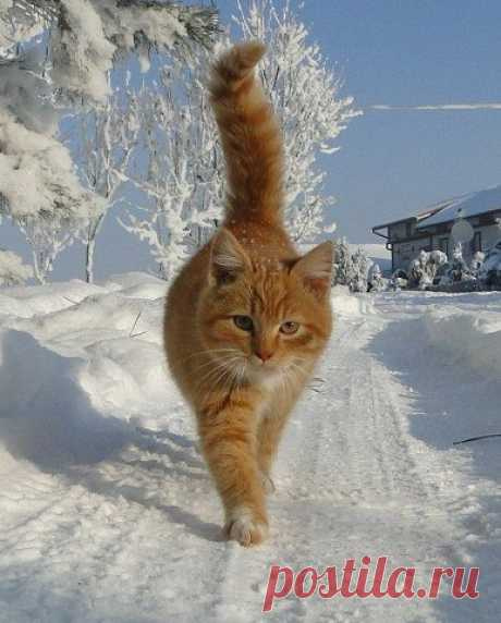 Зима близко...
