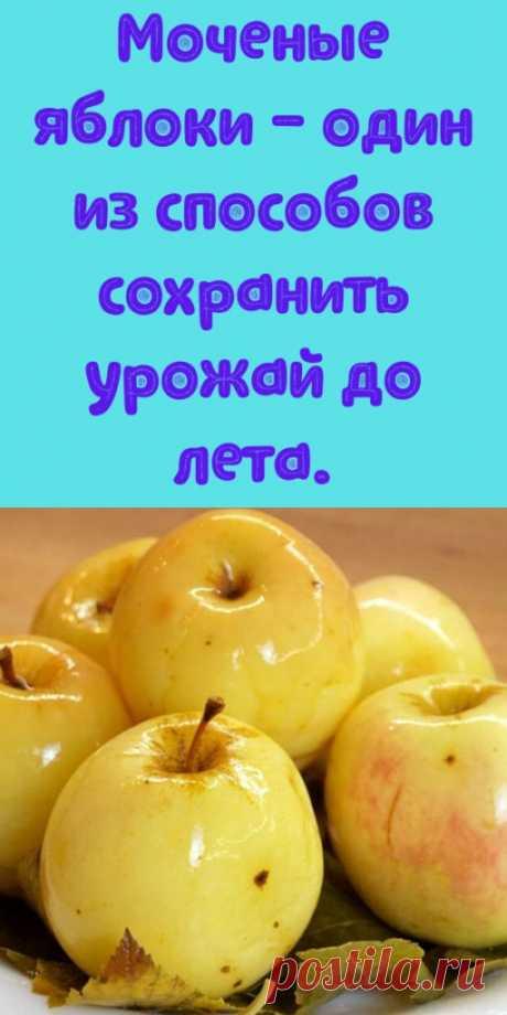 Моченые яблоки - один из способов сохранить урожай до лета. - My izumrud