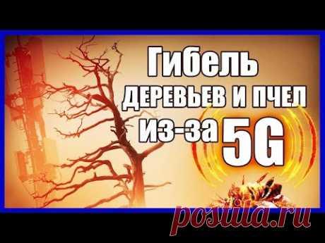 «5G» УБИВАЕТ ДЕРЕВЬЯ И ПЧЕЛ… Смертоносные вышки и фонари