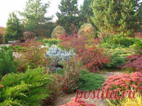 Декоративные кустарники для сада, как вырастить и постричь правильно