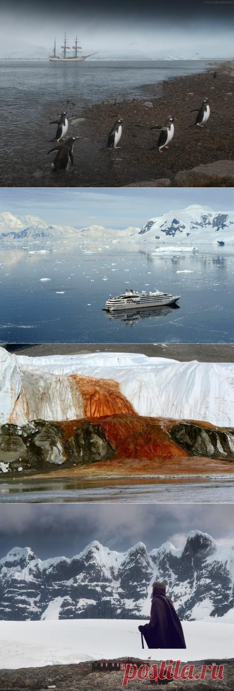 Едем в Антарктиду за 2 миллиона рублей | Неутомимый странник | Яндекс Дзен