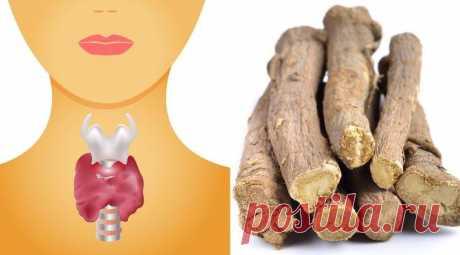Общие симптомы проблем с щитовидной железой и как их лечить