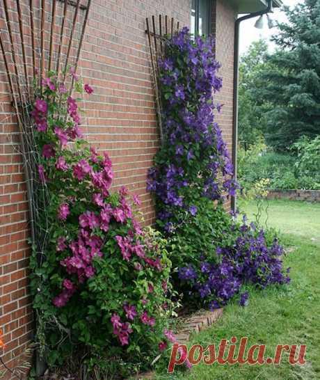 ГДЕ И КАК ПОСАДИТЬ КЛЕМАТИСЫ   САДОВАЯ ФЕЯ - Дача. Сад и Огород             ГДЕ И КАК ПОСАДИТЬ КЛЕМАТИСЫЗнаете ли вы, что от правильной посадки клематиса зависит общее развитие и состояние растения? Посаженная наспех лиана, ни ко…