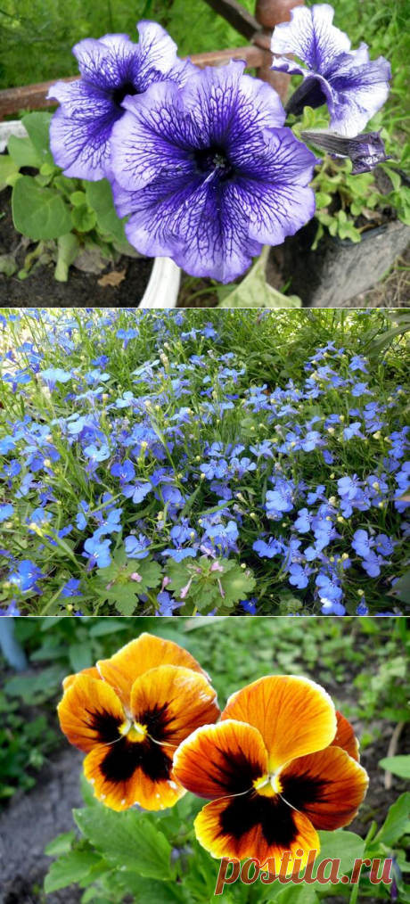 8 flower cultures which sow on seedling in February