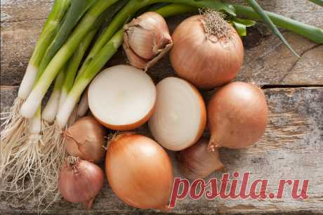 Еврейский способ выращивания зеленого лука из луковицы, которую уже съели | Лейла Милошевич | Яндекс Дзен