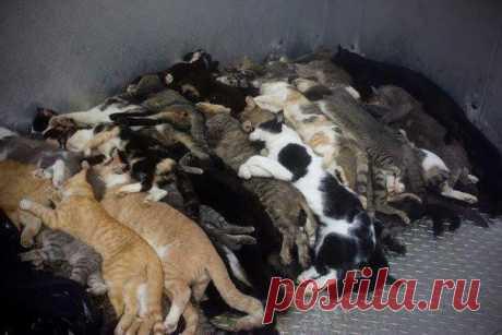 """Помощь животным из приютов БАНО """"Эко"""""""