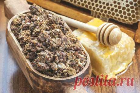 Чудесные свойства пчелиного прополиса: Как приготовить дома настойку и мазь из прополиса | Безумный Доктор | Яндекс Дзен