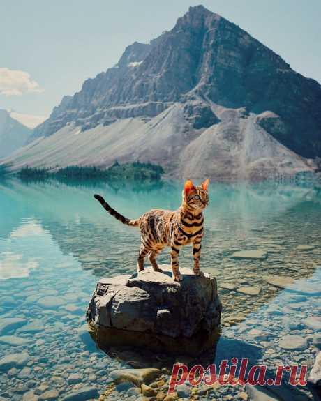 Бесстрашная кошка-путешественница, жизни которой позавидовал бы каждый второй — Infodays