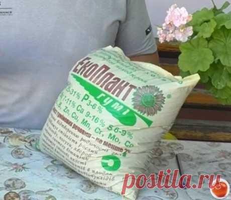 Два удобрения, которые обеспечат плодородие почвы на следующий сезон и сэкономят ваши деньги | ГРЯДКИ ВПОРЯДКЕ | Яндекс Дзен