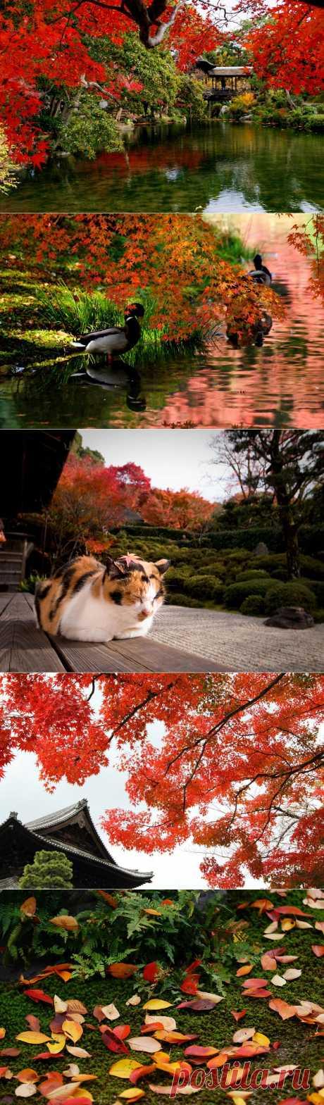 » Необычайно красивый осенний город Киото Это интересно!