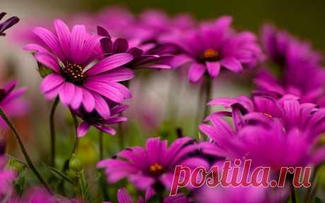 Картинки с цветами на рабочий стол (38 фото) ⭐ Забавник