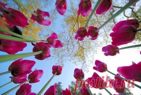 В нетерпеливом ожидании весны))) (мое настроение)   ЖЕНСКИЙ МИР