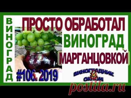 🍇 Potassium permanganate on grapes! I do not believe!