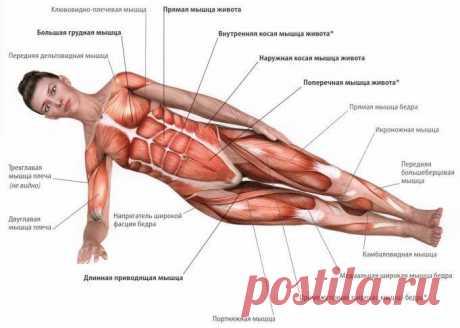 Лучшие упражнения для тренировки мышц кора