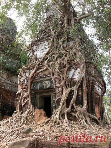 Фантастические деревья планеты Земля