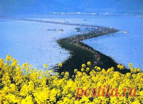 Ходить по воде можно в Корее: место, где расступается море