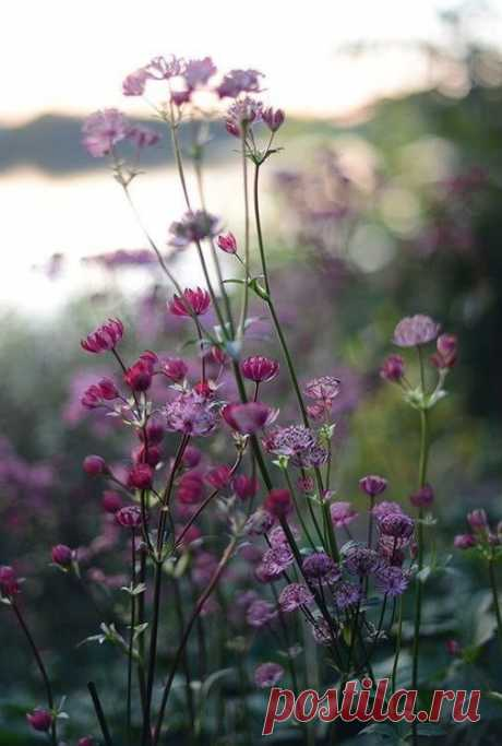 Ах, сколько ж в этом мире суеты...  Живём свой век в какой-то вечной гонке!  А рядом, что-то шепчут нам цветы…  Роса искрится в паутине тонкой…  Лебяжий пух воздушных облаков  Беззвучно падает с небес на воду…  Вселенной правит Мудрая Любовь  И дарит красоту свою природа!   Ах, если б вместо синтетических пилюль  Нам доктор прописал встречать рассветы,   Насобирать лечебные букеты.  Умыться родниковою водой,  Послушать не «попсу», а птичье пенье…  Когда с Природою в гармон...