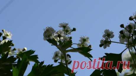 VLOG: ВЕСНА | ЧАСТЬ 2 | ВСЕ ЦВЕТЕТ   Всем добра, дорогие друзья, с вами Aziz Red и канал хорошего настроения!!!!!  День был солнечный и ветреный, такой день, когда можно зайти за угол дома, спрятаться от ветра, прижаться спиной к чуть-чуть согретой солнцем стене и почувствовать всем сердцем радость прихода весны и тепла… Стоять, жмуриться и улыбаться.  - Евгений Гришковец. Реки
