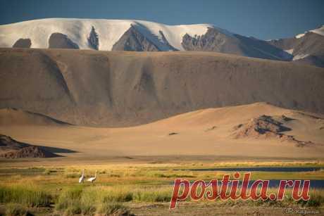 Монгольские пейзажи от Светланы Казиной: nat-geo.ru/photo/user/30896/
