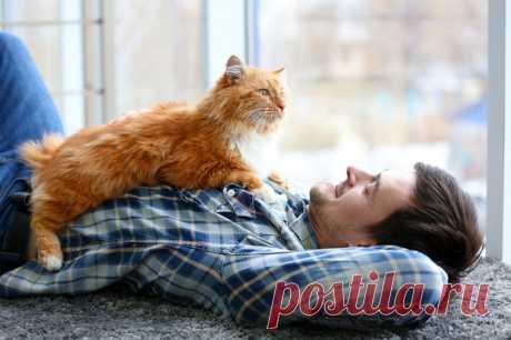 10 признаков, что твой кот счастлив Статья, предназначенная для повышения квалификации и улучшения качества обслуживания кота двуногими рабами.Допустим, ты выучил простейшие правила обслуживания кота. Даешь вовремя корм, убираешь...