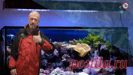 Давно хотели завести рыбок? Делаем бюджетный аквариум своими руками.